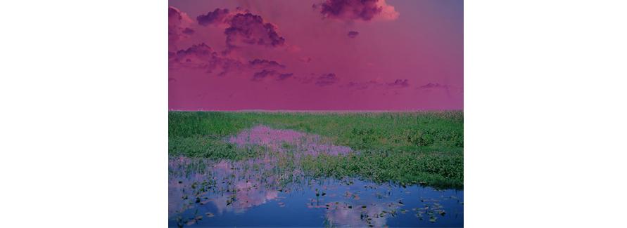 Sleep (Swamp), 2009