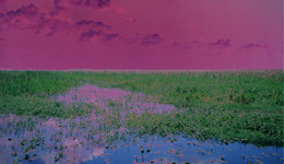 Catherine Yass, Sleep(Swamp), 2009